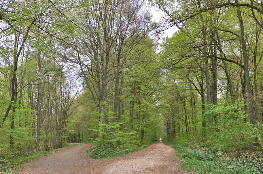 Bietet Ruhe in der Krise: Ein Spaziergang im Wald.
